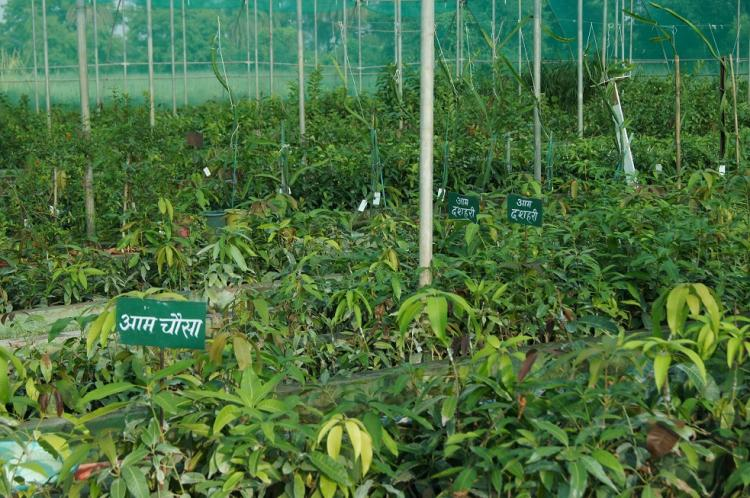Rajhans com: Rajasthan Horticulture And Nursery Society